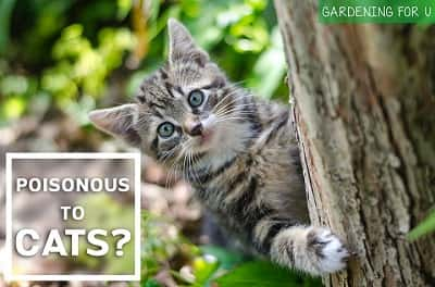 Are Orchids Poisonous to Cats featured