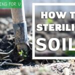 How to sterilize soil?