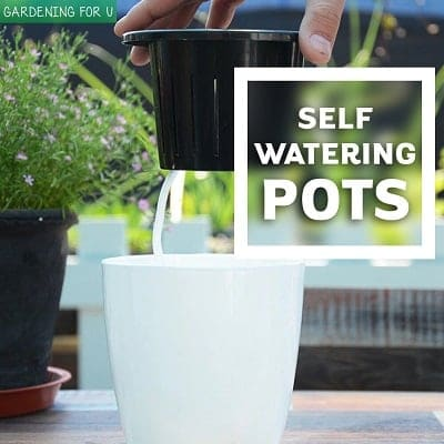 Self Watering Pots (Featured)