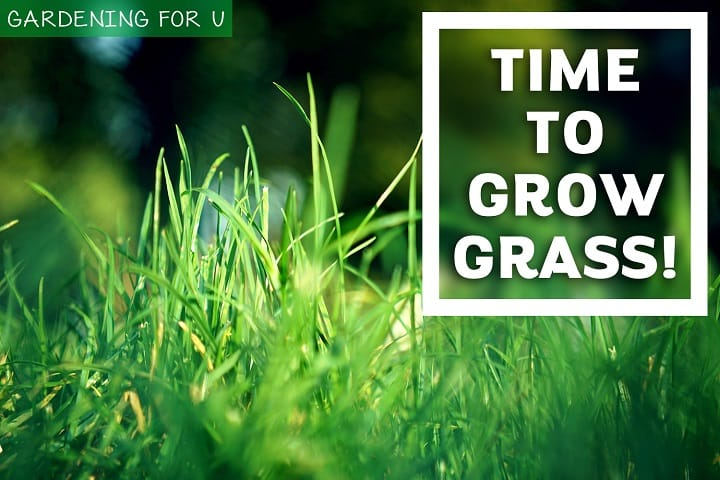 Time to Grow Grass