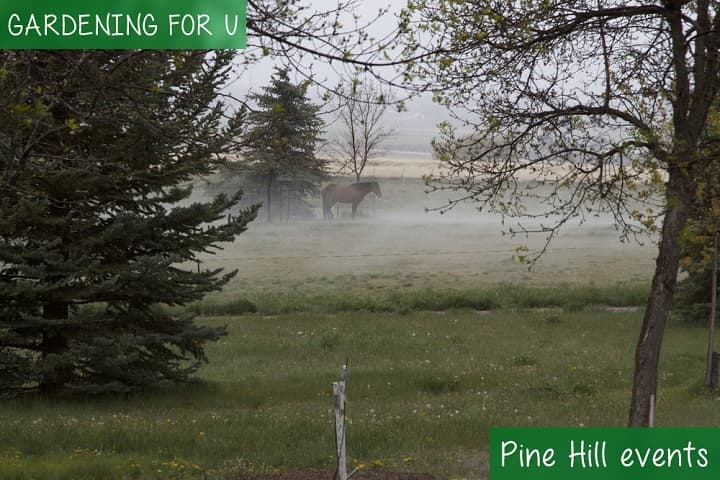 Pine Hill events