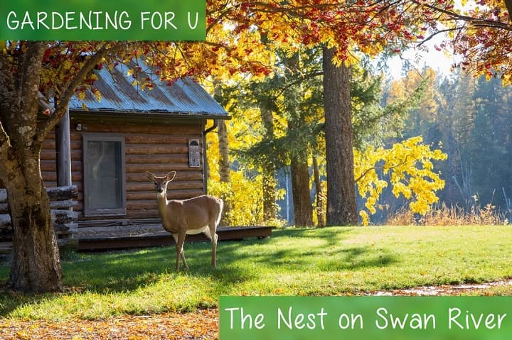 The Nest on Swan River