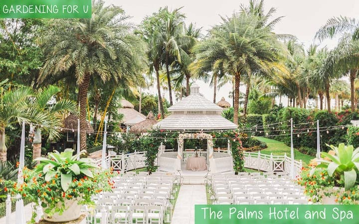 The Palms Hotel and Spa