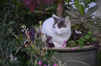 How To Keep Cats From Pooping In House Plants - Thumbnail