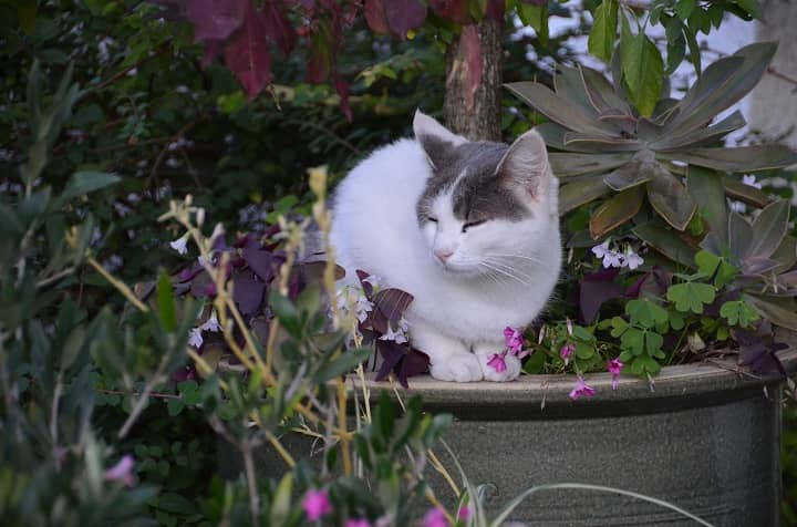 How To Keep Cats From Pooping In House Plants