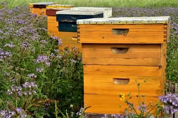 Top 10 Best Bee Boxes Thumbnail