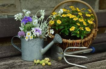 Top 7 Best Watering Cans in 2021 - Thumbnail