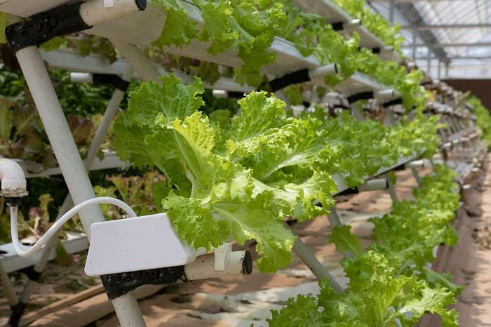 What is hydroponic