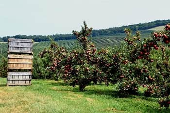 fruit trees for West Virginia