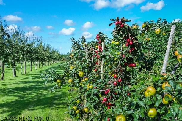 Best Fruit Trees for Texas Hill Country
